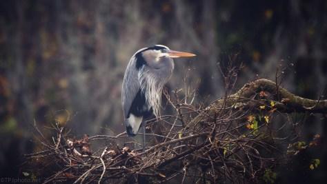 Dark Rainy Day, Heron