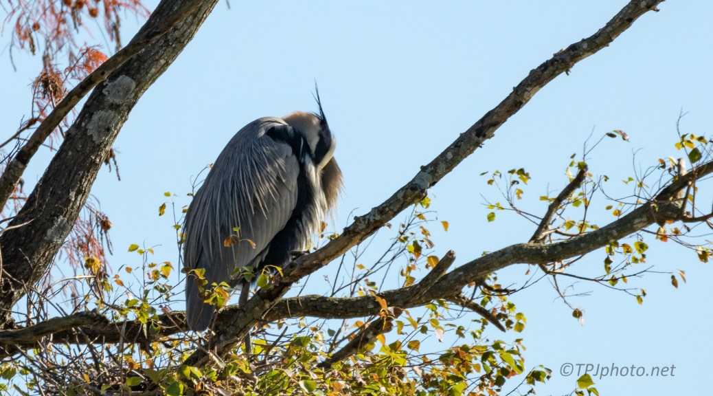 In A Rookery With Nothing To Do, Heron