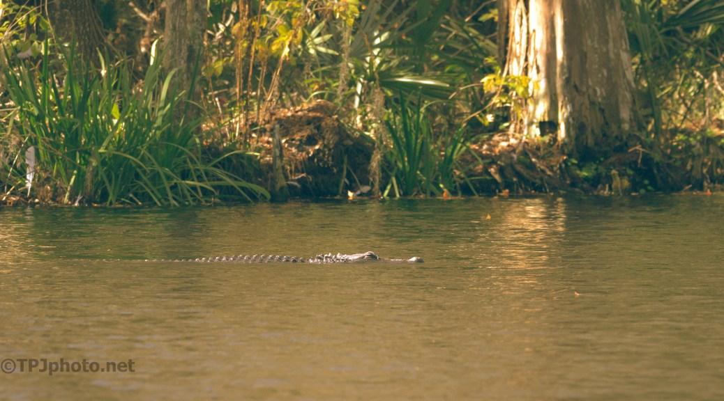 Cruising Through A Swamp