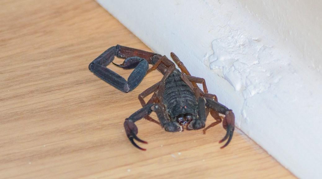 A Scorpion Surprisea