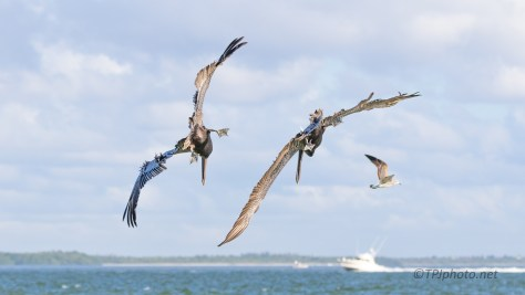 A Well Executed Attack, Pelican