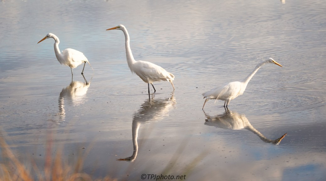 Egrets In The Morning