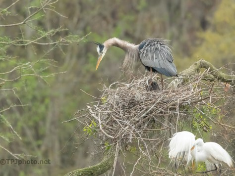 Too Much Noise Downstairs, Heron