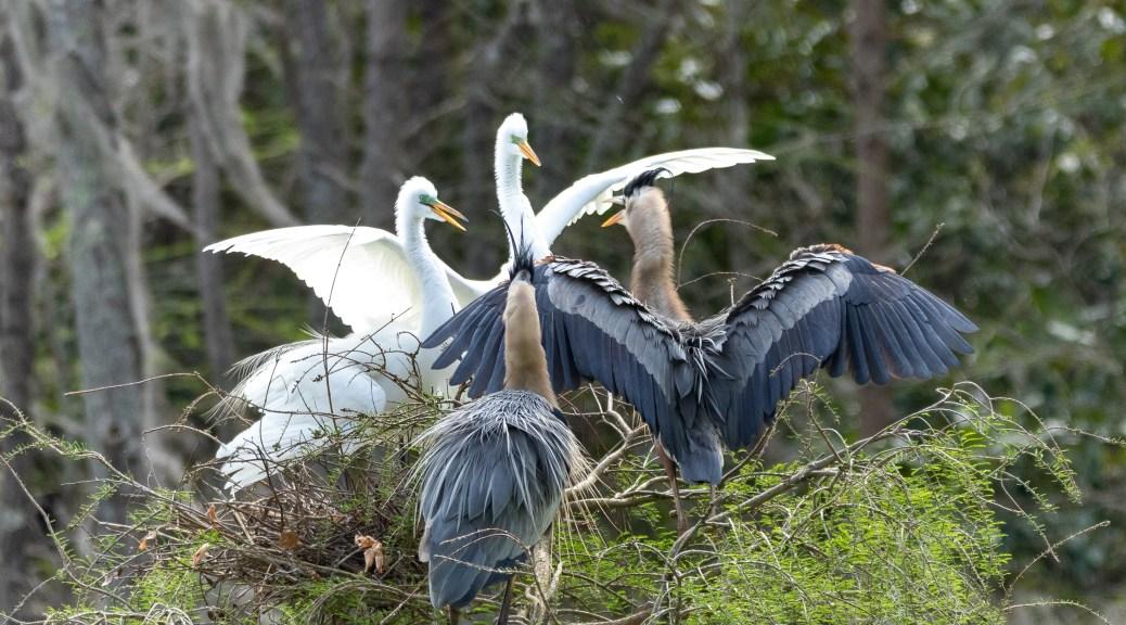 Not Enough Space, Heron / Egret