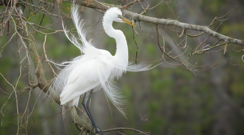 From An Egret Rookery