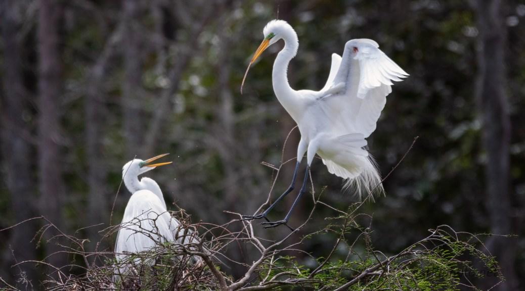 Trips For Sticks, Egret