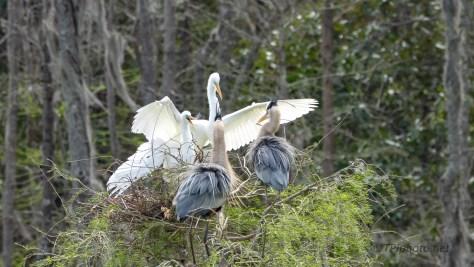 Making Boundaries, Egret And Heron