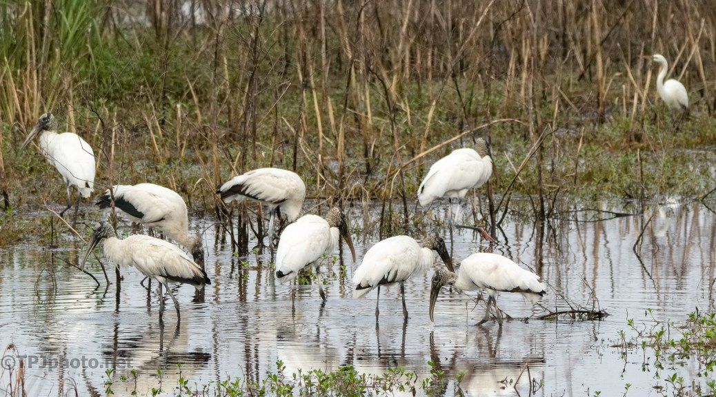 Walking With Storks (2)