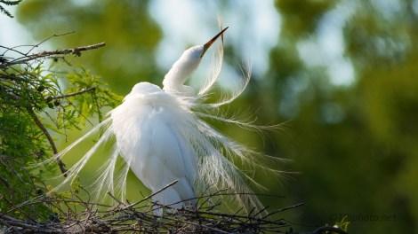 Getting Pretty, Egret