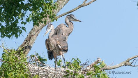These two May Never Leave Home, Heron