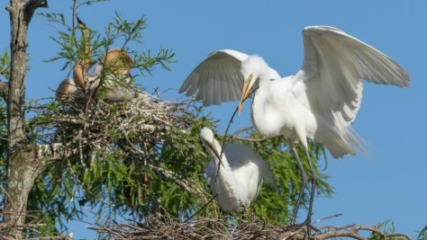 Another Delivery, Egret