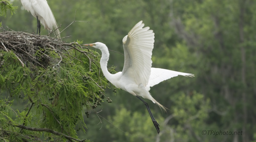 To The Nest, Egret