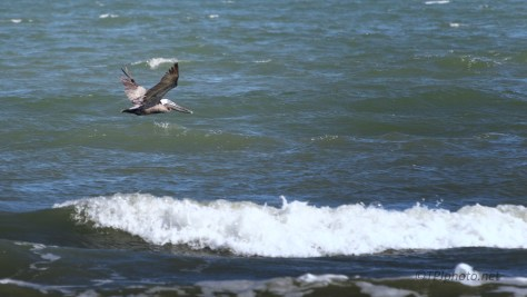 Pelican. Above The Waves