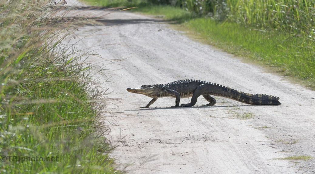 Mud Gator, Part 2
