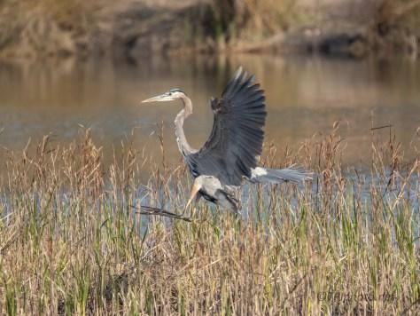 Almost A Crash Landing, Heron