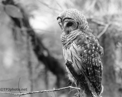 Just Watching, Owl