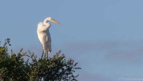 Up On Top, Egret