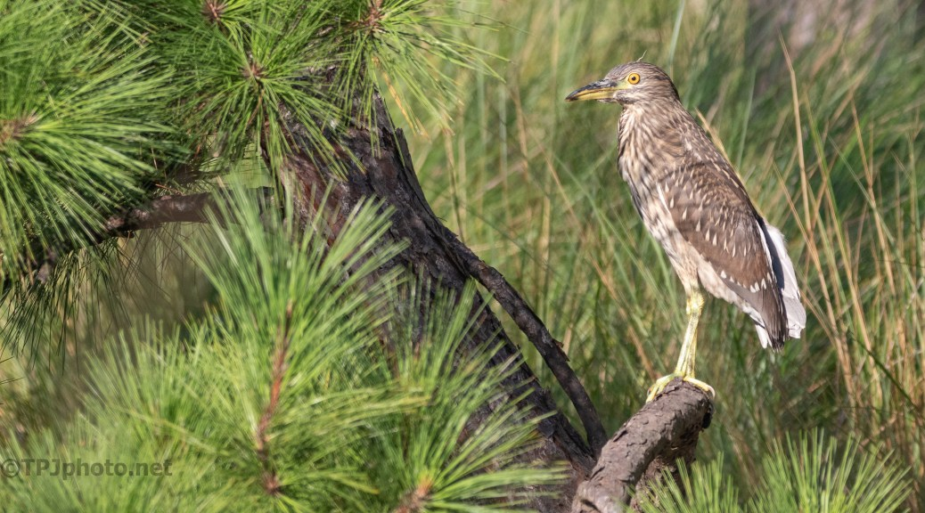 Learning About Life, Young Night Heron