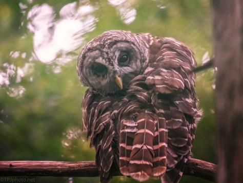 Well Hidden, Owl
