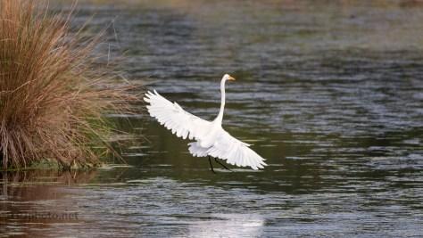 Graceful Landing