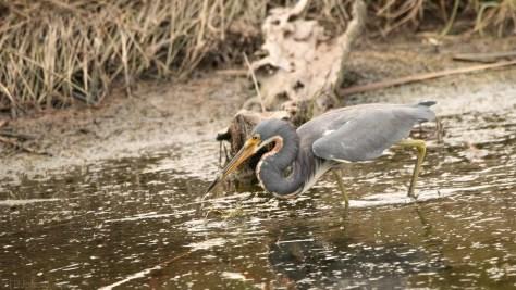 Heron Snacks