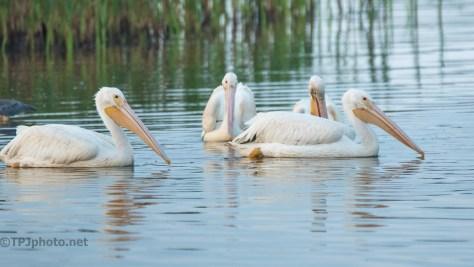 The U Turn, Pelican
