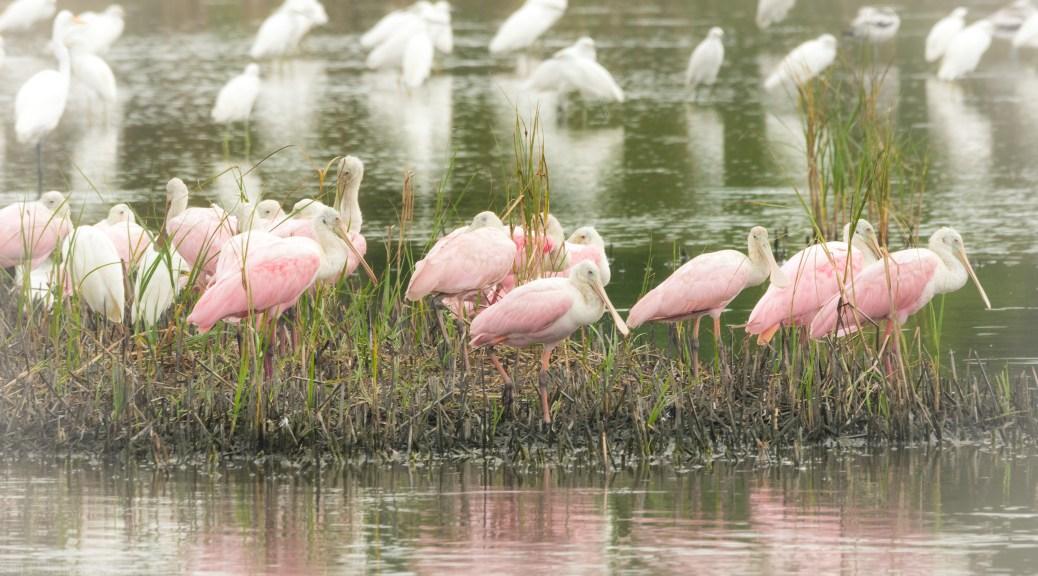Gathering Of Pink
