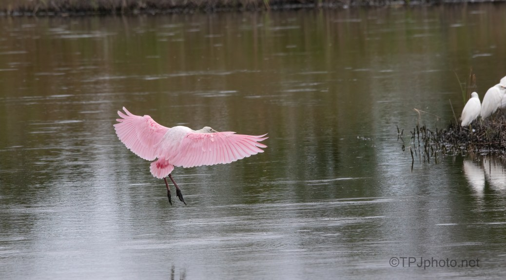 Pink Crash Landing