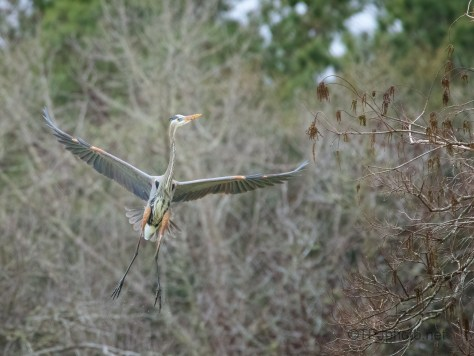 Up To The Nest, Heron
