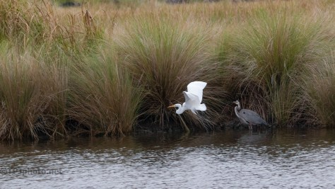Changed His Mind, Egret And Heron