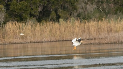 Off To The Other Side, Pelicans