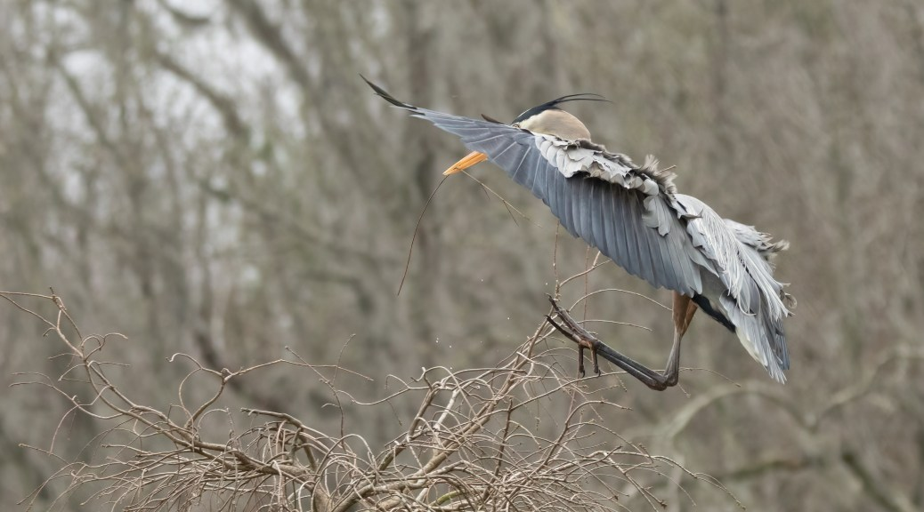 Landing With A Flair, Heron