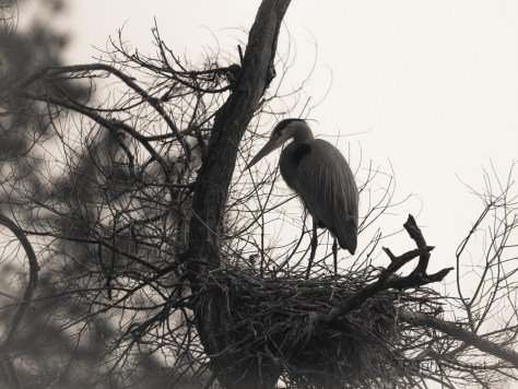 End Of Day, Heron
