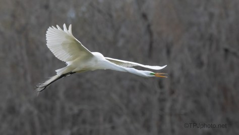 Loud And The Perfect Distance, Egret