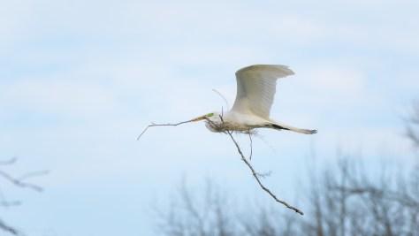 Over Achiever, Egret