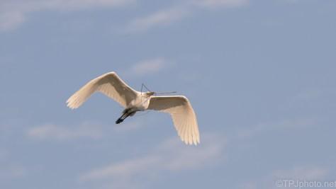 Blue Sky And A White Bird