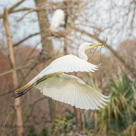 Different Views And Times, Egret