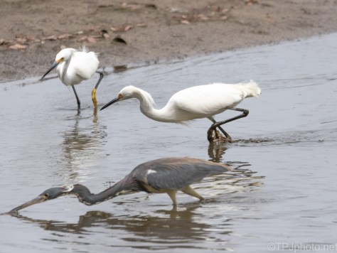 Everyone's A Winner, Egret, Heron