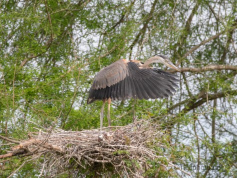 In For A Surprise, Heron