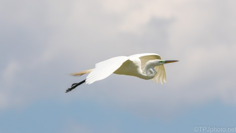 Egret Passing By