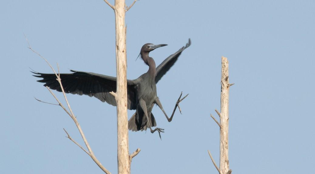Worthy Of Applause, Heron