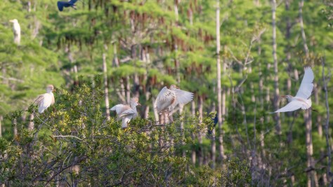 Remote Rookery