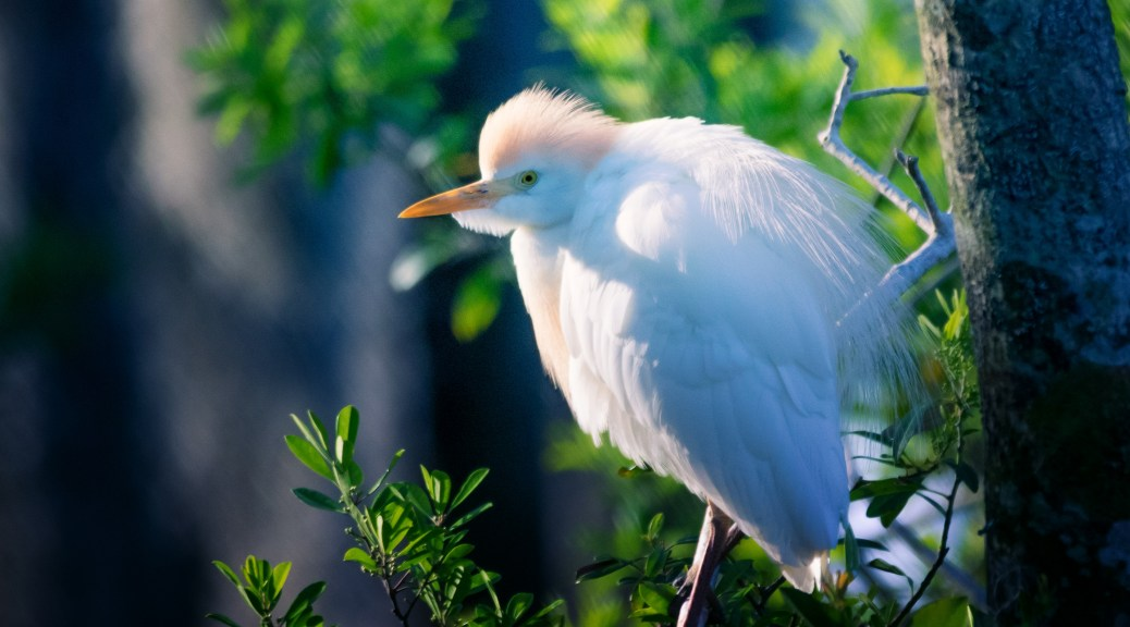 Watching As We Go By, Egret