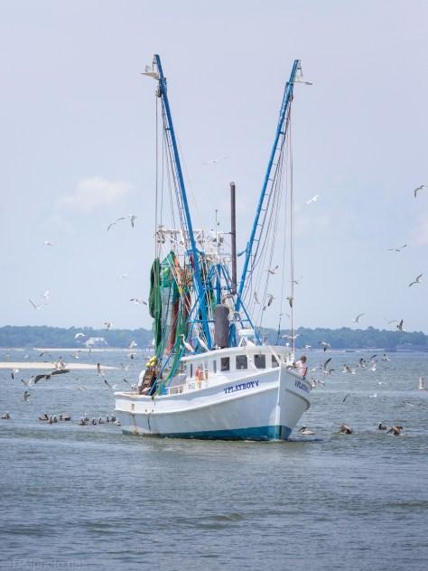 Shrimper Returning To Port