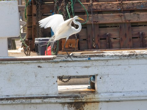 Egrets Are Pirates Too