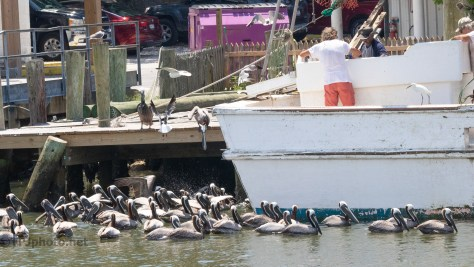 Cleaning The Catch, Locals Get The Rest