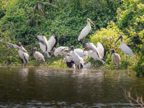 Stork Public Baths
