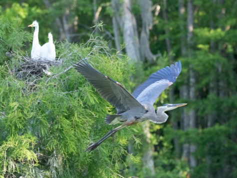 Leaving The Rookery