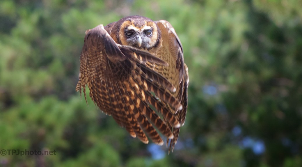 Focus On The Eyes, Owl