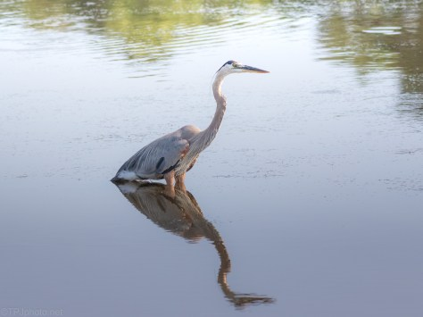By A Dike, Great Blue